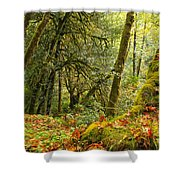 Rainforest Trunk Shower Curtain