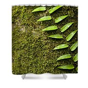 Rainforest Vine Climbing Sabah Borneo Shower Curtain