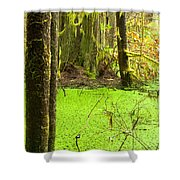 Rainforest Wetland Wildernis Of West Coast Bc Shower Curtain
