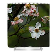 Rainy Day Dogwood Shower Curtain
