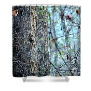 Rainy Day In The Forest Shower Curtain