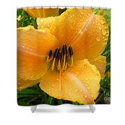 Rainy Day Lily Shower Curtain