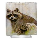 Rakish Raccoon  Shower Curtain