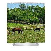 Ranch Daisies Shower Curtain