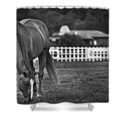 Ranch Horse Shower Curtain