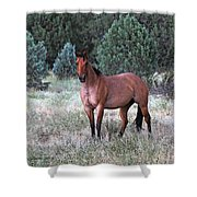 Ranch Horse Young Arizona Shower Curtain