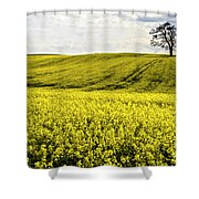 Rape Landscape With Lonely Tree Shower Curtain by Heiko Koehrer-Wagner