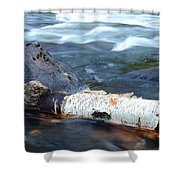 Rapids And Birch Shower Curtain