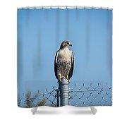 Raptor - 3 Shower Curtain