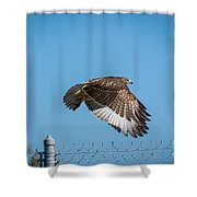 Raptor - 4 Shower Curtain