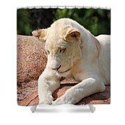 Rare Female White Lion Shower Curtain