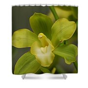 Rare Green Orchid Shower Curtain