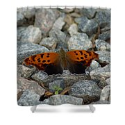 Rarely-sighted Butterfly Species Shower Curtain
