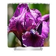Raspberry Jam Iris Shower Curtain