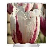 Raspberry Vanilla Tulip Shower Curtain