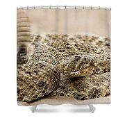 Rattlesnake 1 Shower Curtain