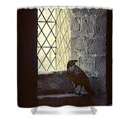 Raven By Window Shower Curtain