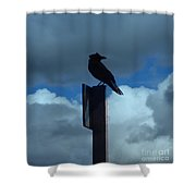 Raven Checking The Wind Shower Curtain