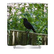 Raven In The Wild Shower Curtain