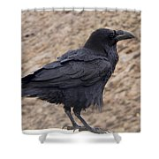 Raven Perched On A Ledge Shower Curtain