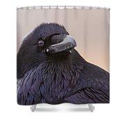 Raven Portrait Shower Curtain