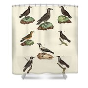 Ravens Crows And Daws Shower Curtain