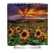 Rays Of Sunflowers Shower Curtain