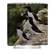 Razorbill Cliff Shower Curtain