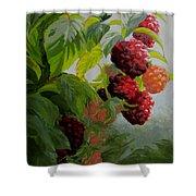 Razzleberries Shower Curtain