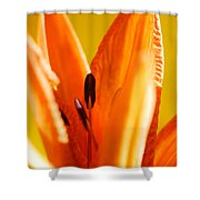 Reach For The Light Shower Curtain
