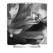 Reach Grey Limited Edition Shower Curtain