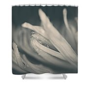Reach Out And I'll Be There Shower Curtain by Laurie Search
