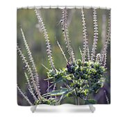 Reaching For Fall Shower Curtain