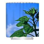 Reaching For Sunlight Shower Curtain