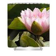 Reaching Lily Shower Curtain