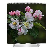 Reaching Sunlight Shower Curtain