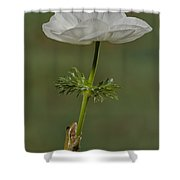 Reaching To The Top Shower Curtain