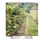 Ready For Harvest  Shower Curtain by Lisa Russo