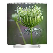 Ready To Burst Shower Curtain