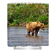 Ready To Pounce On A Salmon  In The Moraine River In Katmai National Preserve-ak Shower Curtain