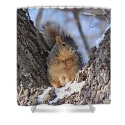 Ready To Rumble Shower Curtain