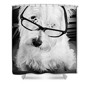 Really Portait Of A Westie Wearing Glasses Shower Curtain