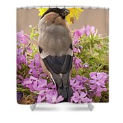 Rear View Of Female Bullfinch Standing Shower Curtain