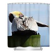 Rear View Pelican Shower Curtain