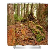 Recycling In The Cheakamus Rainforest Shower Curtain
