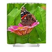 Red Admiral Butterfly And Zinnia Flower Shower Curtain
