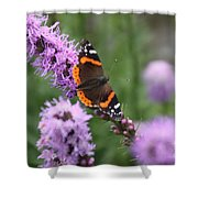 Red Admiral Butterfly On A Blazing Star Shower Curtain