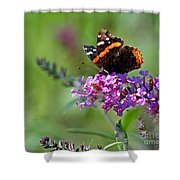 Red Admiral Butterfly On Butterfly Bush Shower Curtain