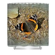 Red Admiral Butterfly - Vanessa Atalanta Shower Curtain