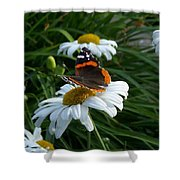 Red Admiral On A Daisy Shower Curtain